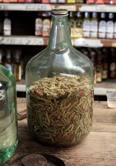 Личинки агавовой моли